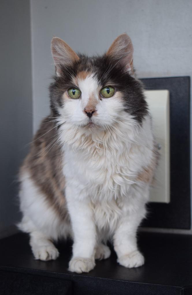 image of Suzie