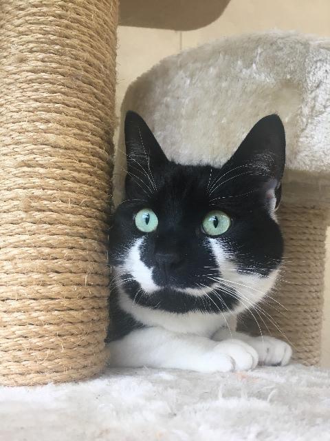 A Picture of Reggie