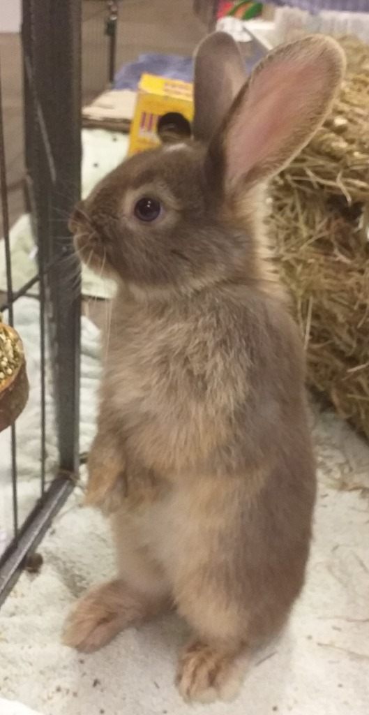A Picture of Bunny