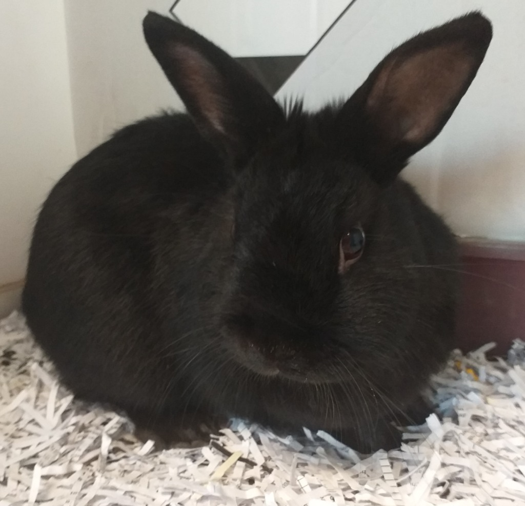A Picture of Thumper