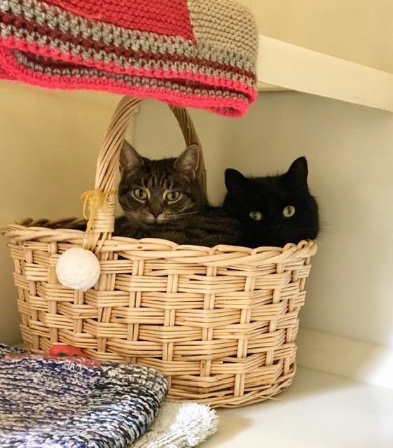 Bella / Bertie
